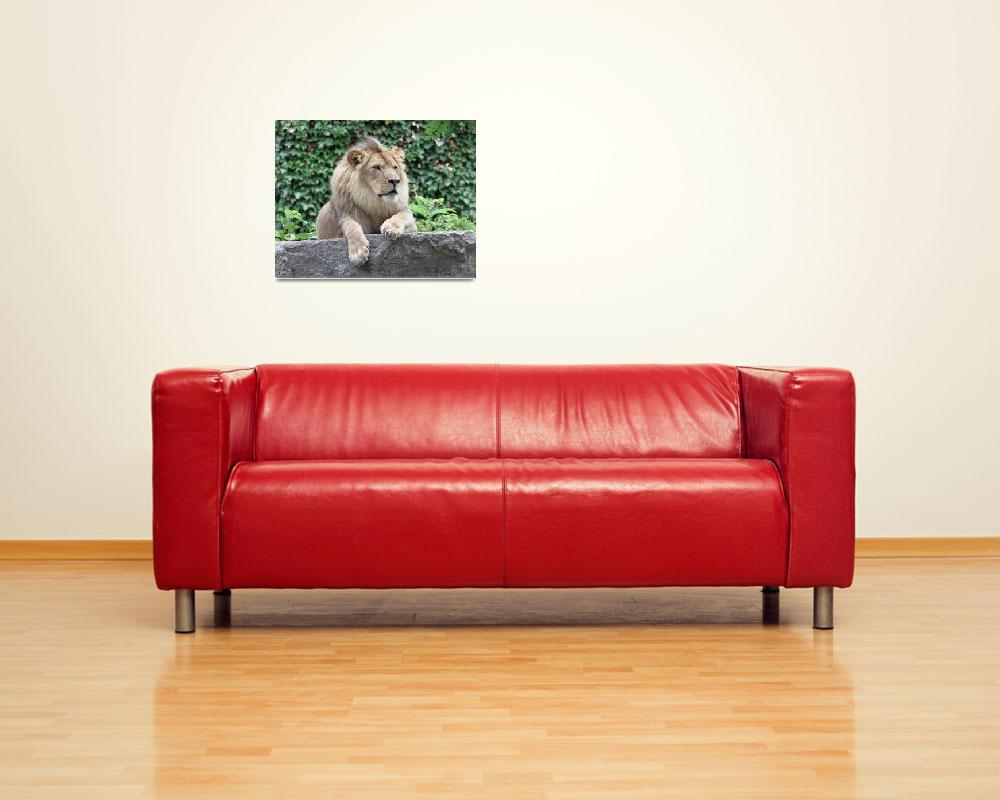 """Lion Portrait Horizontal""  (2011) by DelightfulTrifles"