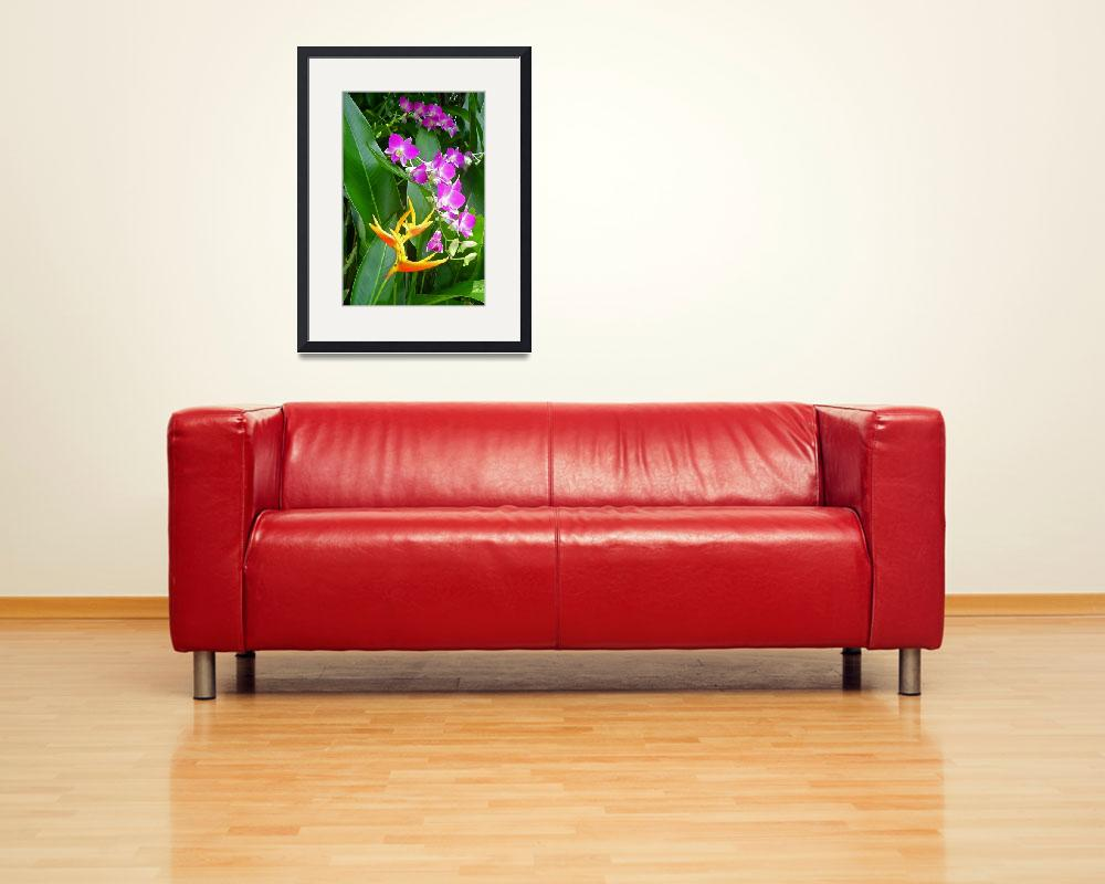 """Heliconia and Orchids&quot  (2005) by JackHolmes"
