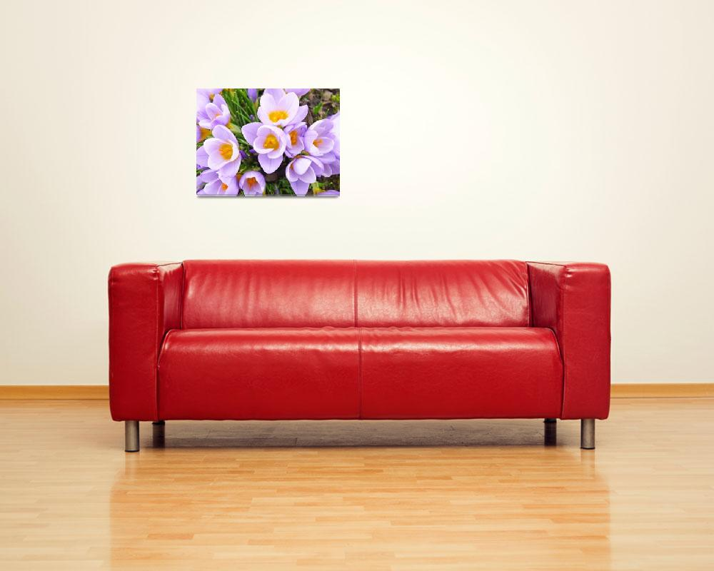 """Spring Crocus Flowers Art Prints Floral Gardens""  (2014) by BasleeTroutman"