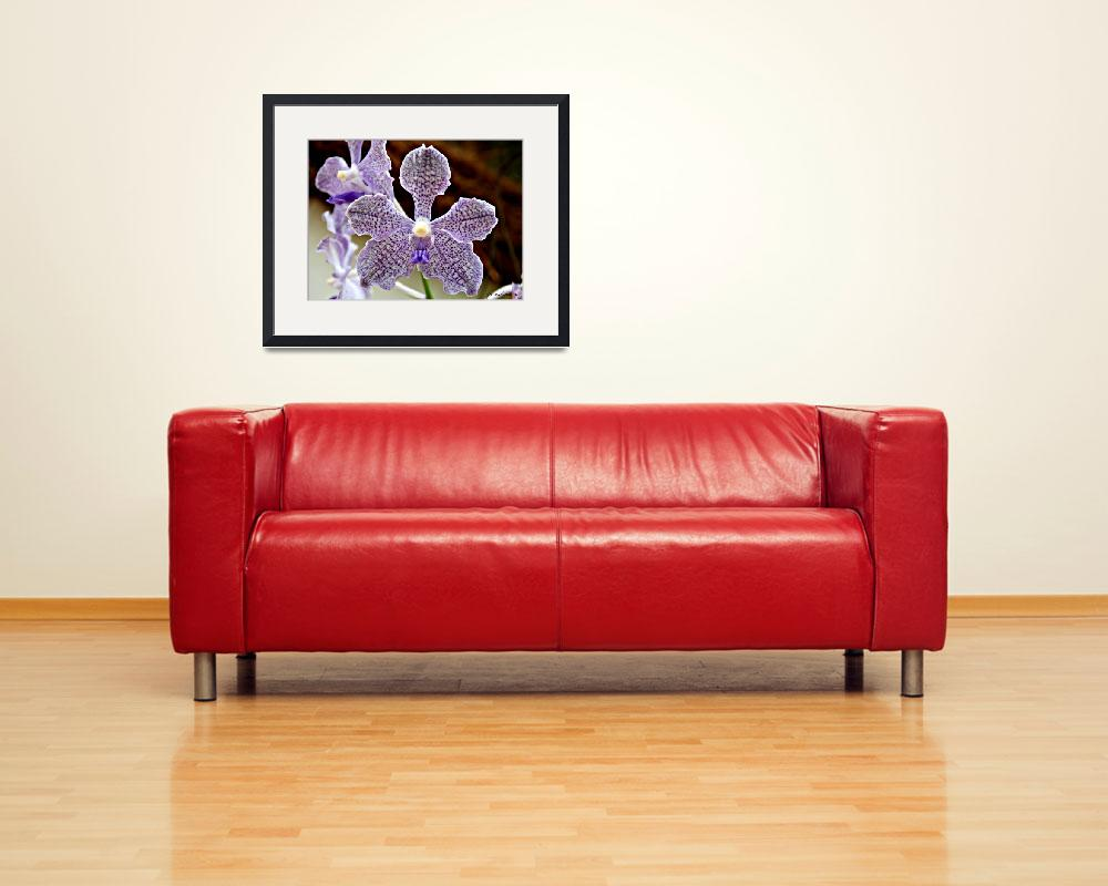 """""""Orchids&quot  (2010) by pravine"""
