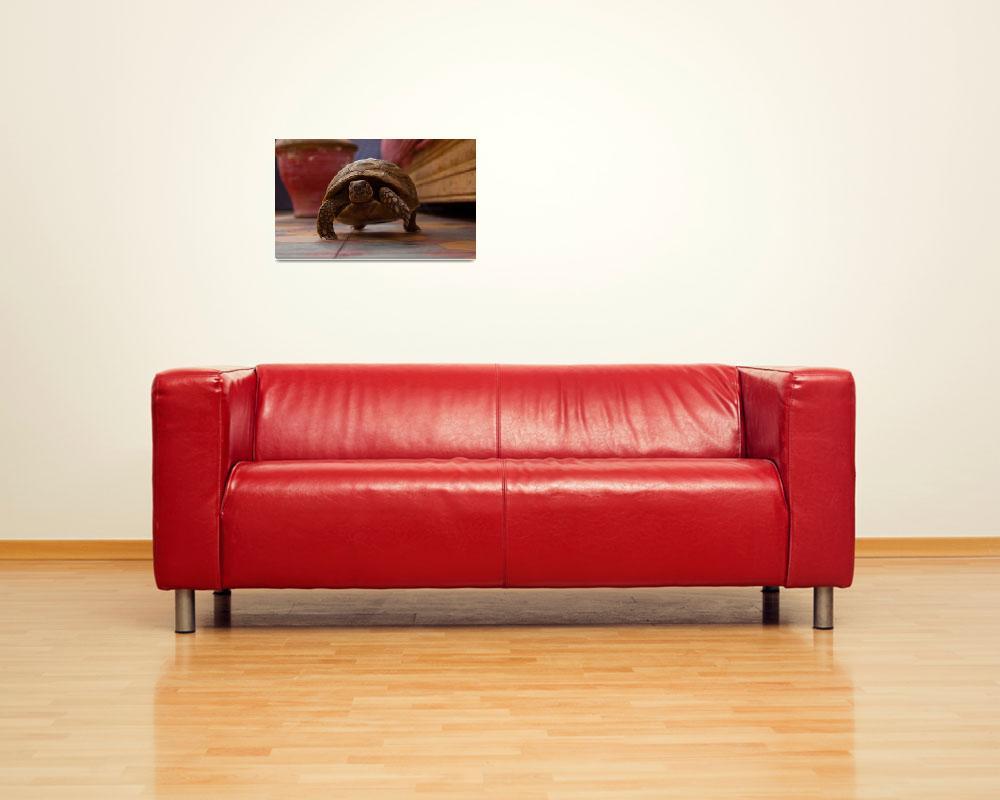 """""""Urban Tortoise""""  (2011) by JezMeyer"""