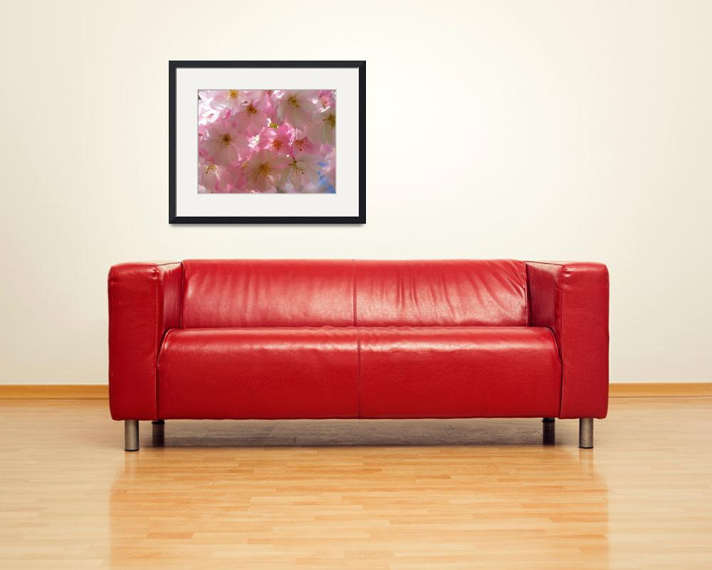 """""""Cherry Blossoms&quot  (2012) by SusanSolakArt"""