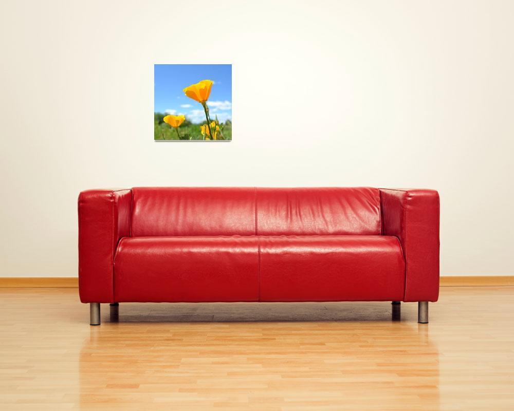 """""""Orange Poppy and Sky""""  (2011) by PatriciaSanders"""