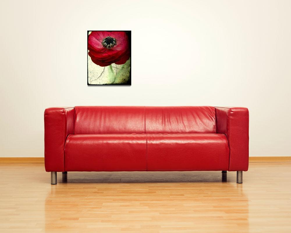 """""""Red Ranunculus, weathered image&quot  by Linde"""