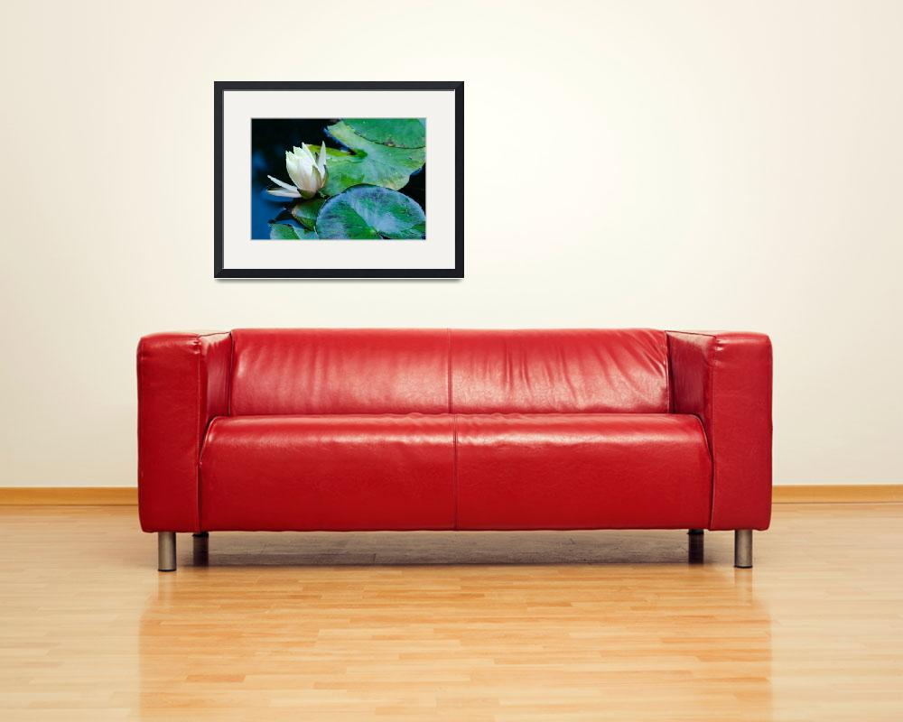 """""""Water Lily&quot  (2013) by boppintheblues"""
