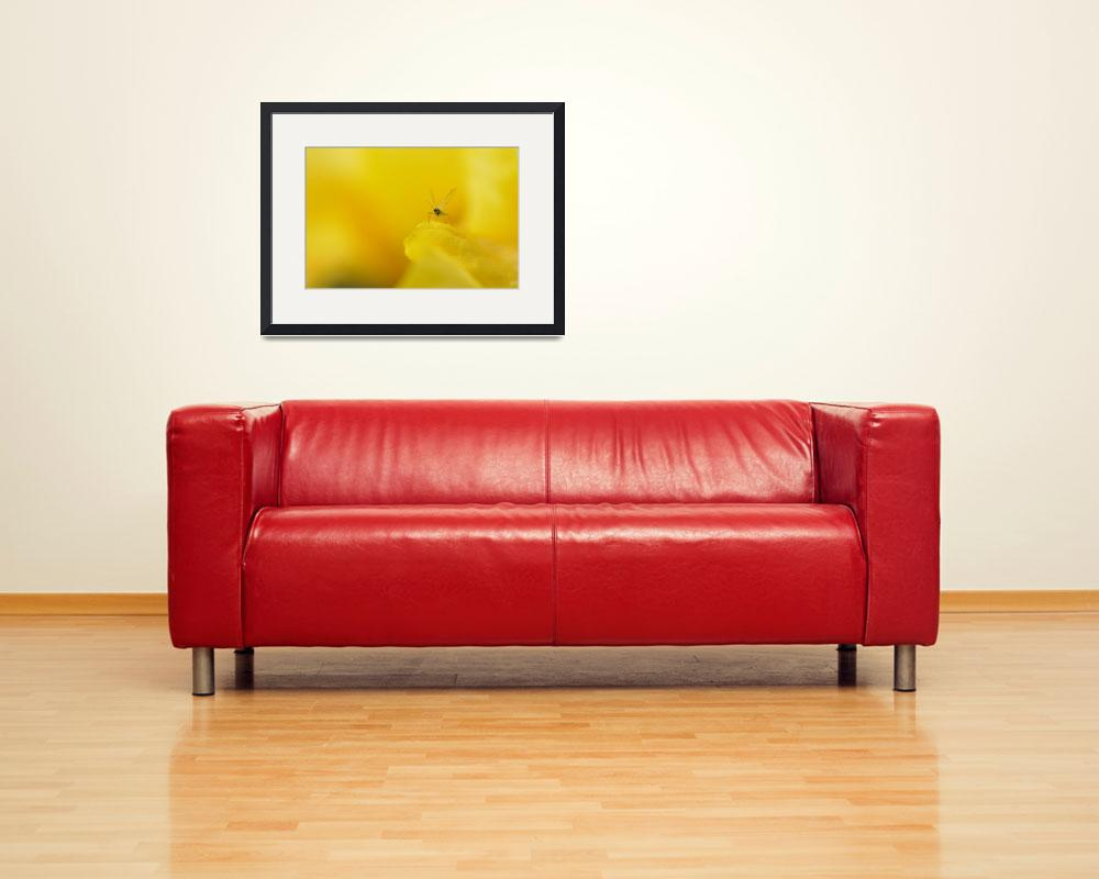 """""""Tiny Aphid in a Yellow World&quot  (2011) by LauraM"""