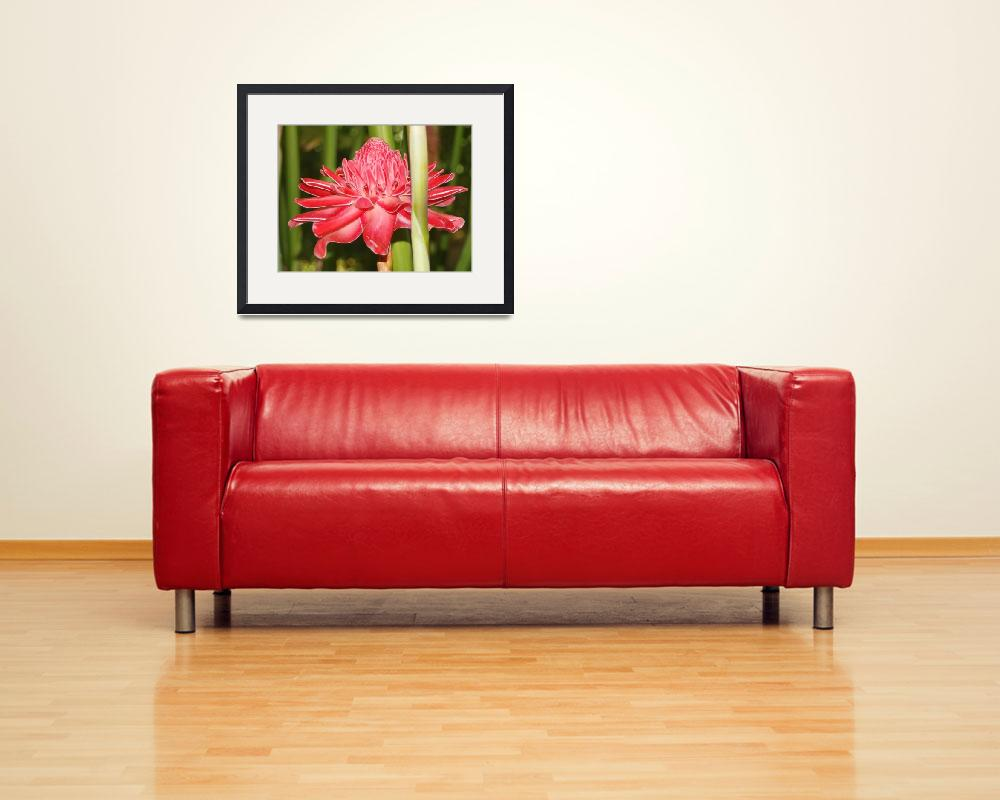 """""""Red Torch Ginger.&quot  (2015) by easel"""