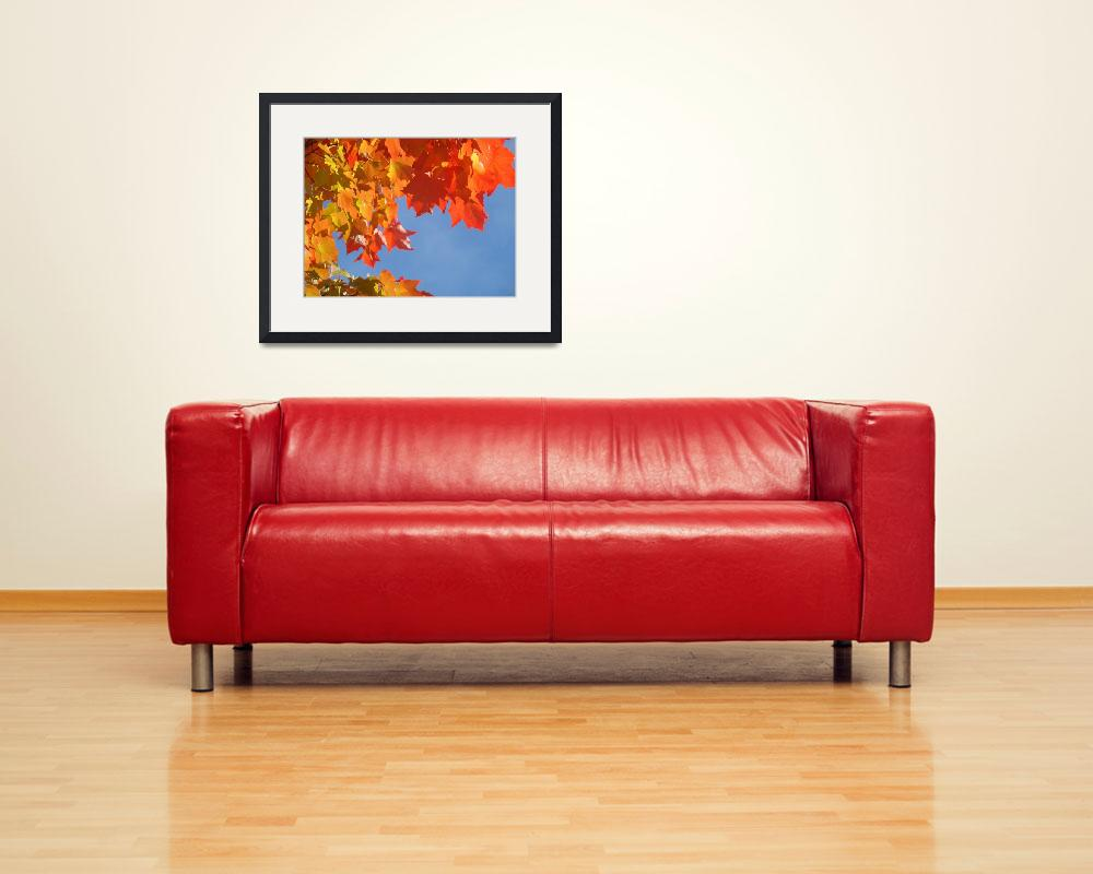 """Red Orange Autumn Leaves Fall Blue Sky art prints&quot  (2013) by BasleeTroutman"