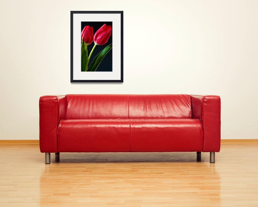 """""""Two Tulips&quot  (2013) by boppintheblues"""