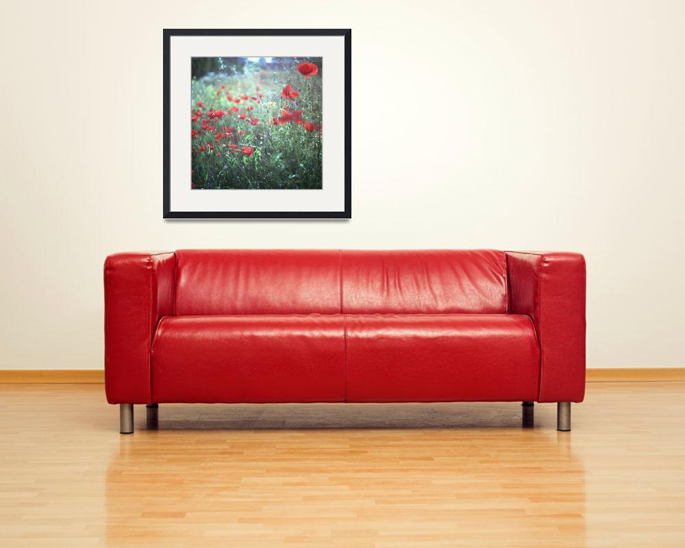 """""""Red wild poppy flowers on green Hasselblad square&quot  (2009) by edwardolive"""