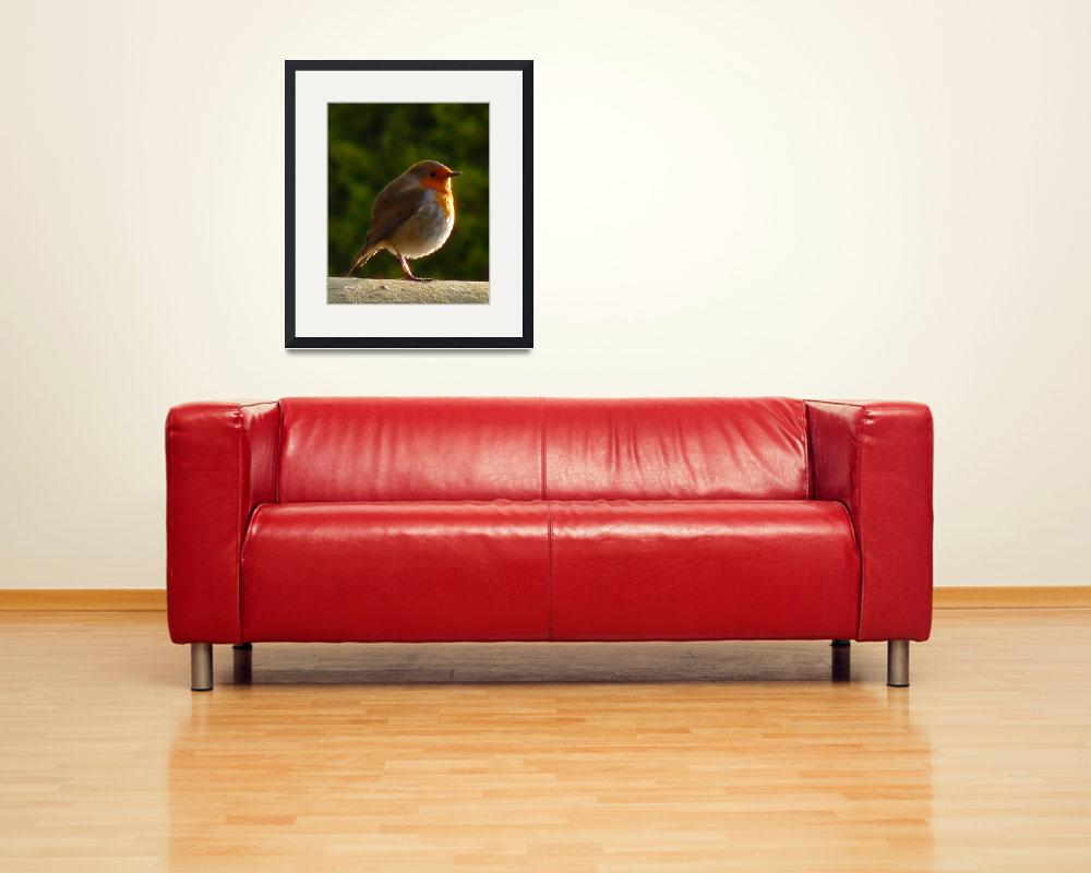 """""""British Robin&quot  (2009) by nemosphotography"""