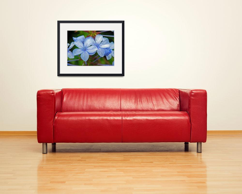 """""""Plumbago Auriculata&quot  by justaddink"""