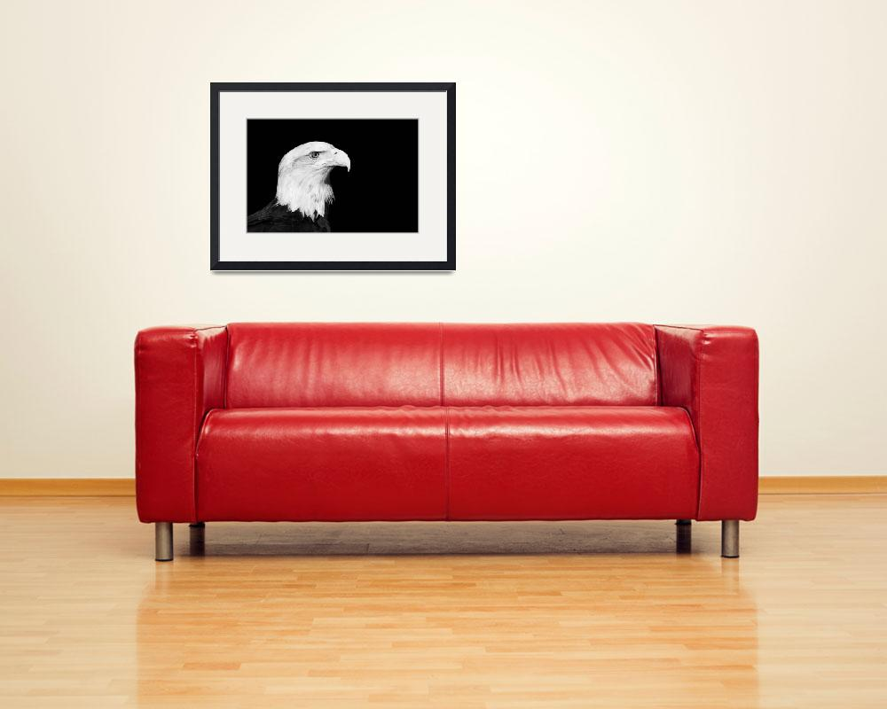 """Bald Eagle Portrait Black and White Print&quot  (2012) by StephsShoes"
