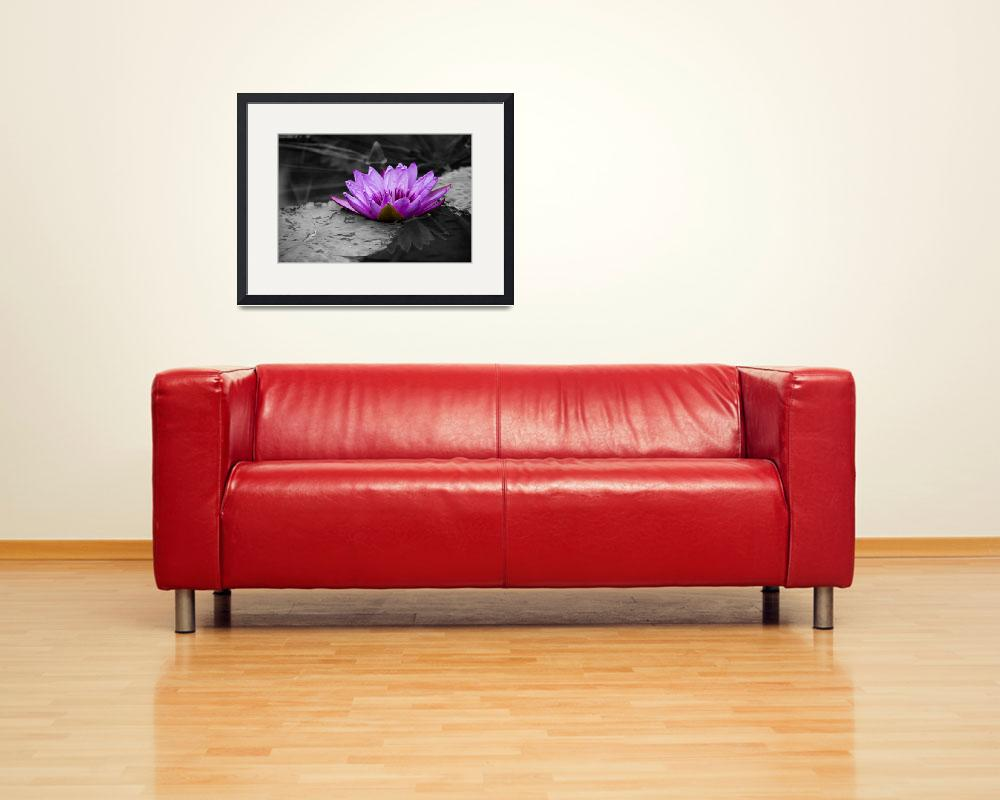 """""""Purple Water Lily 002 Black and White Background&quot  (2013) by ValeriesGallery"""