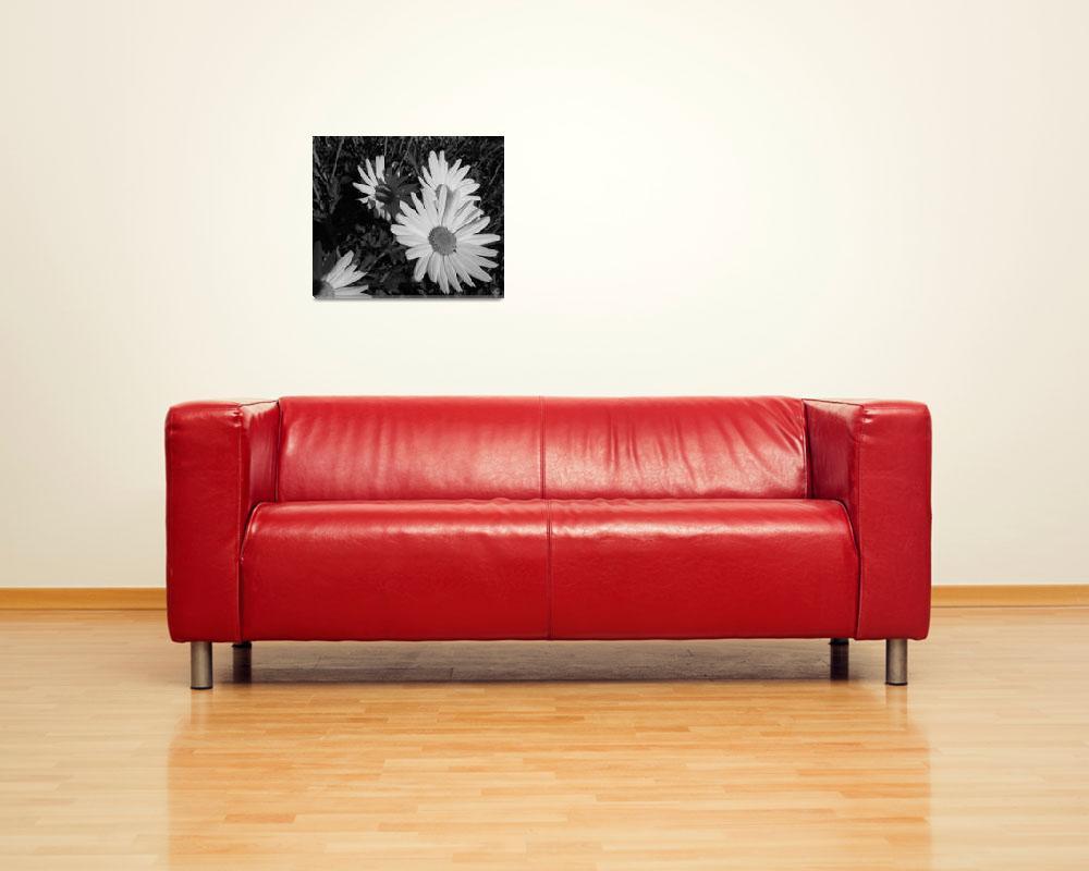 """White daisies at dusk""  (2009) by liv-ellingsen"
