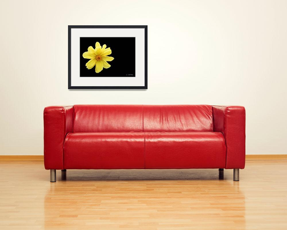 """Yellow Daisy&quot  (2011) by MzEmCab"