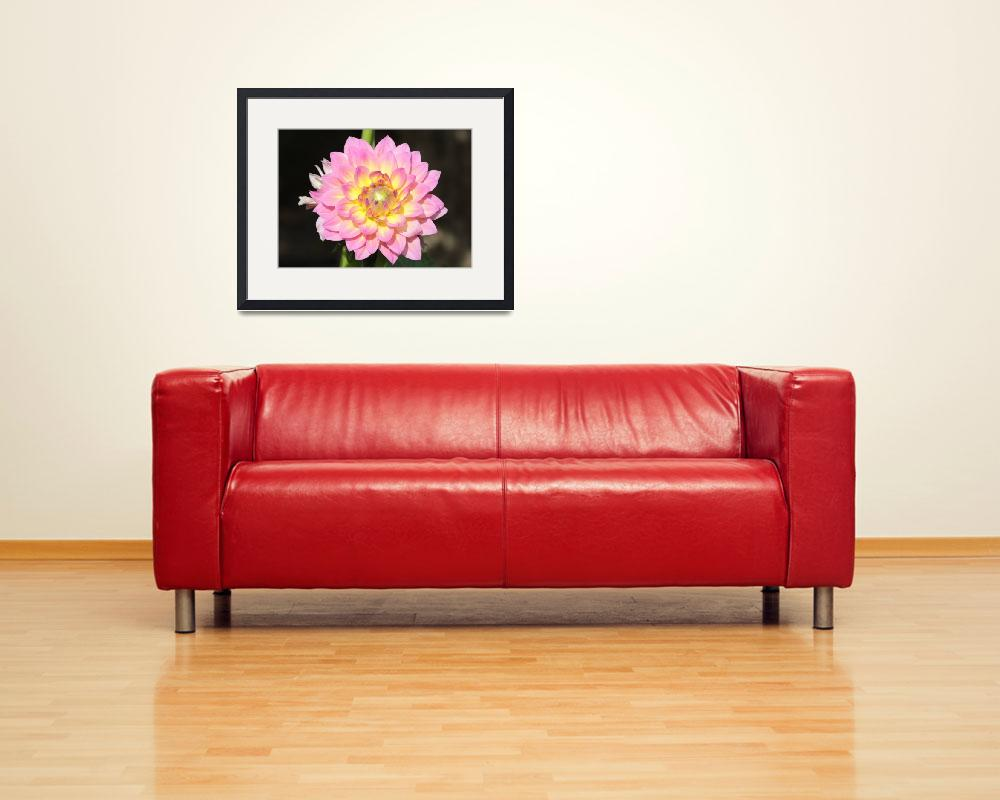 """""""Pink Dahlia with Spider&quot  (2014) by Groecar"""