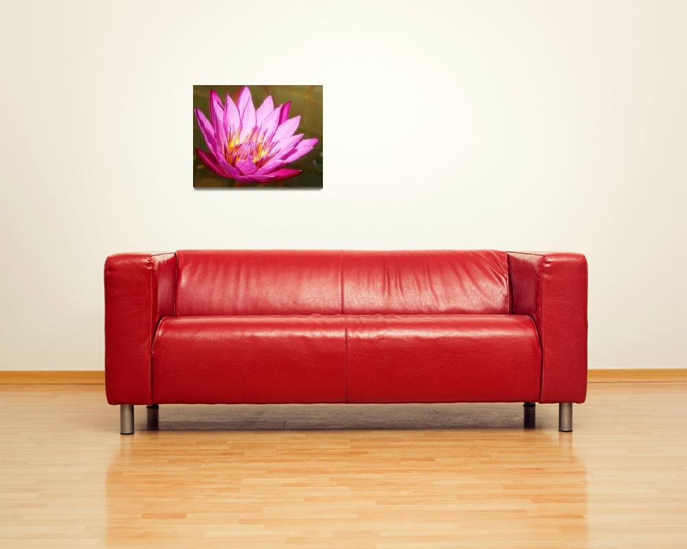 """""""Passionate Pink Water Lily""""  (2010) by soulenergy"""