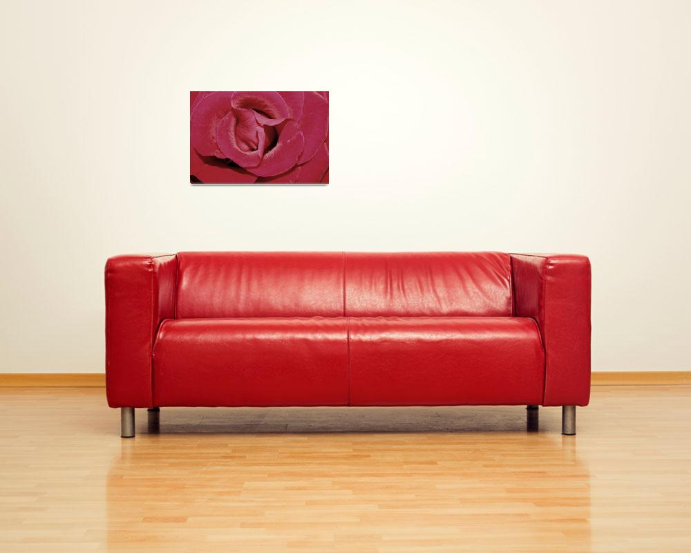 """""""Floral-Rose 3""""  (2008) by willifindunow"""