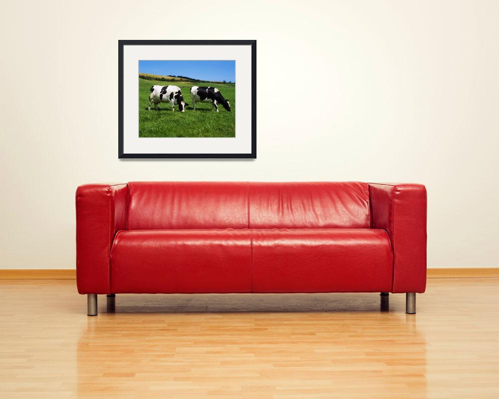 """Dairy Cattle, County Cork, Ireland""  by DesignPics"