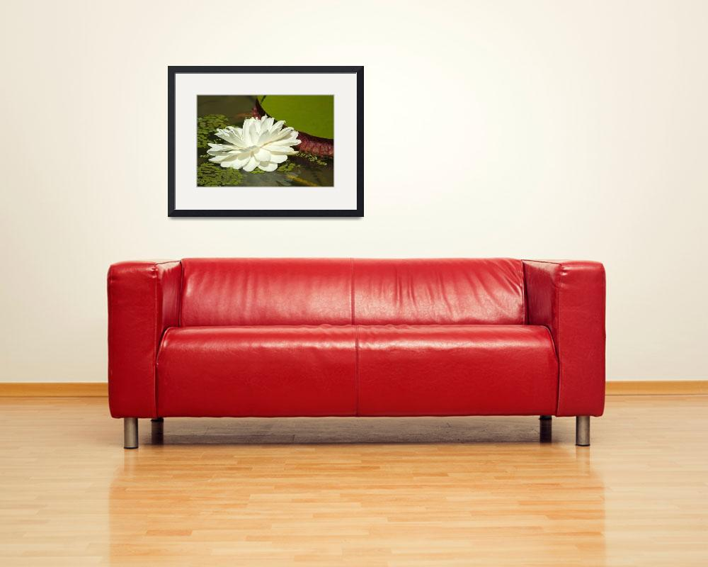 """""""Water Lily, Nymphaeaceae&quot  (2011) by einsiedler"""