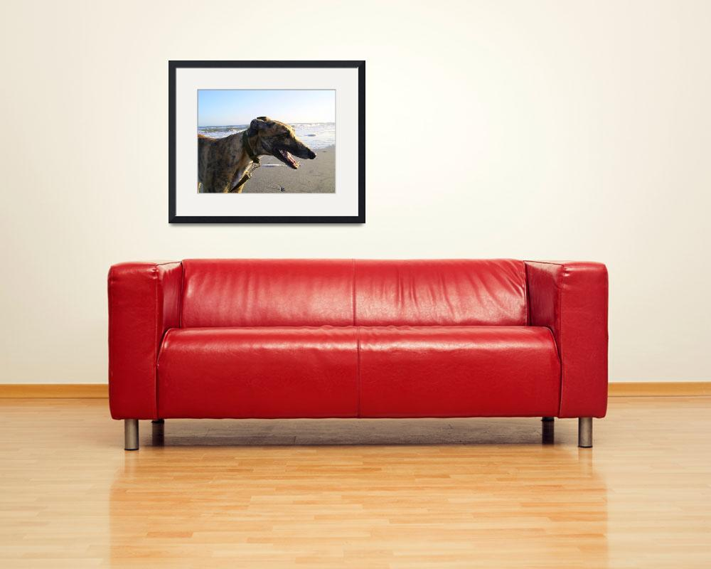 """""""Photo Of Zack (Greyhound)&quot  (2008) by marty528"""