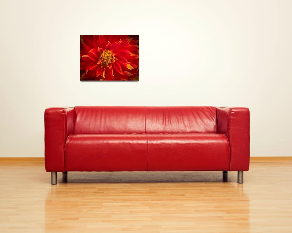 """Red Dahlia Flower&quot  (2009) by johncorney"