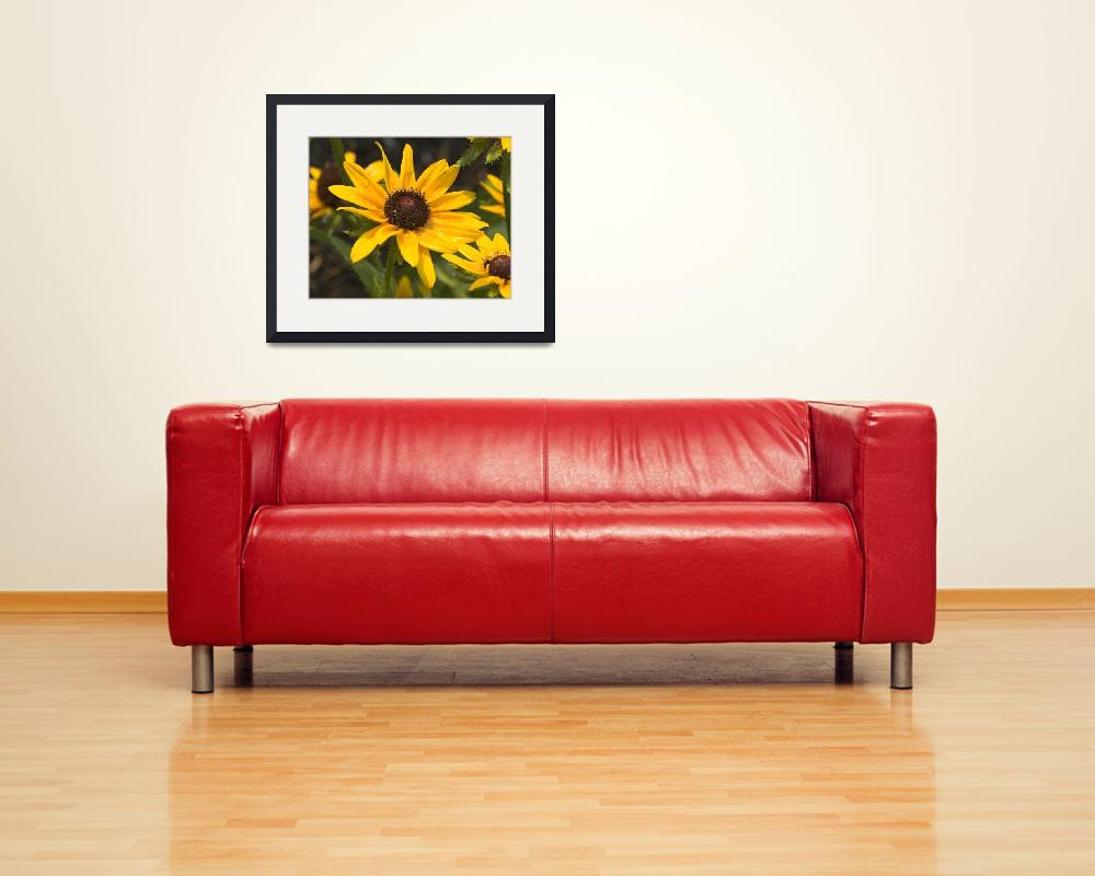 """""""Black-eyed Susan&quot  (2008) by tricia"""
