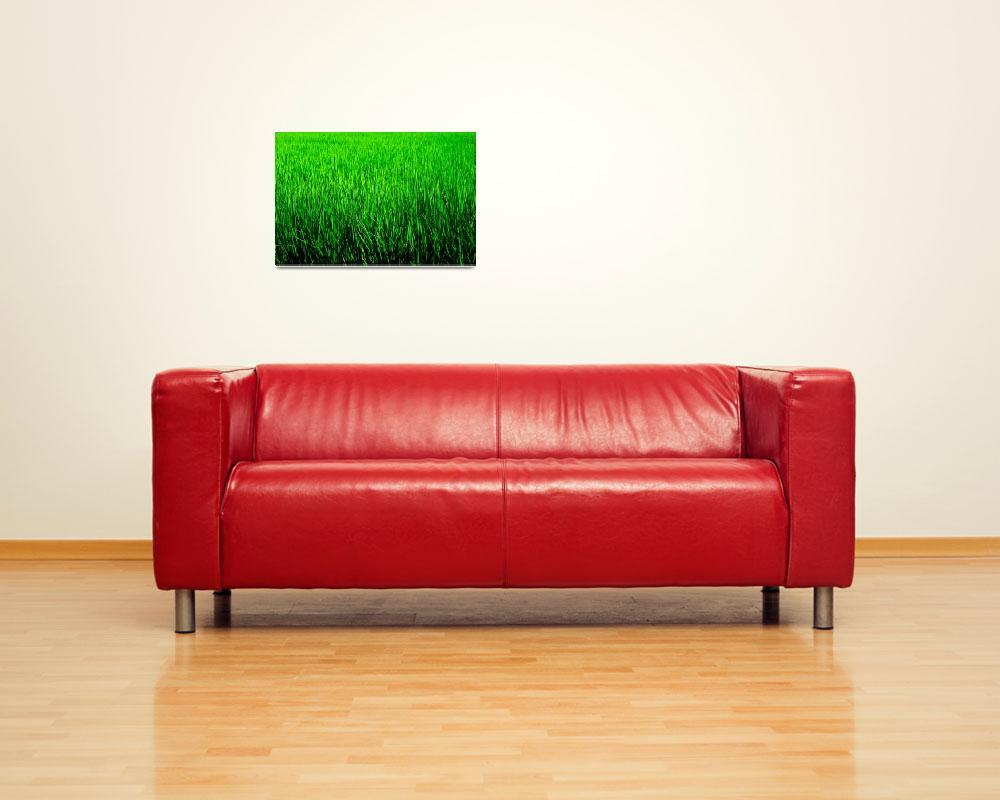 """Green&quot  by manganite"