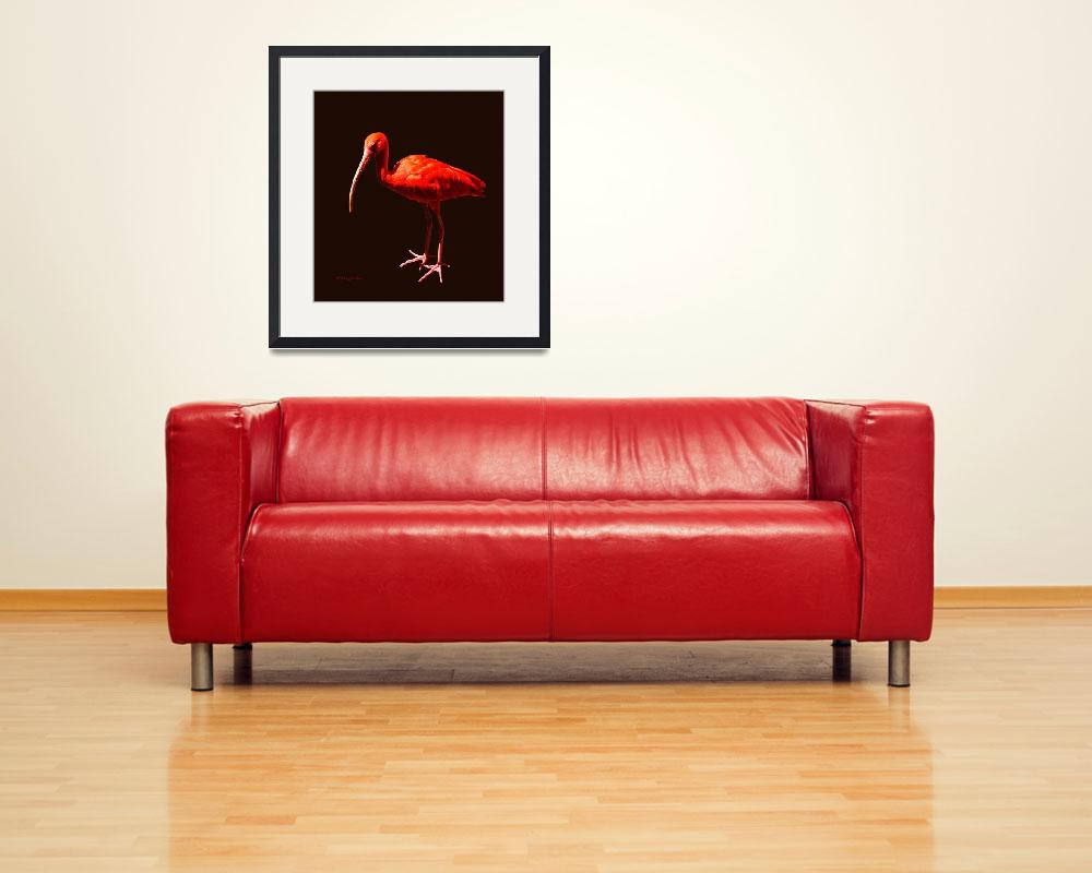 """Scarlet Ibis on Black&quot  (2011) by AnimalsbyDiDi"