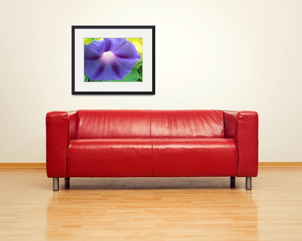 """""""Purple Morning Glory&quot  (2008) by willis-prints"""