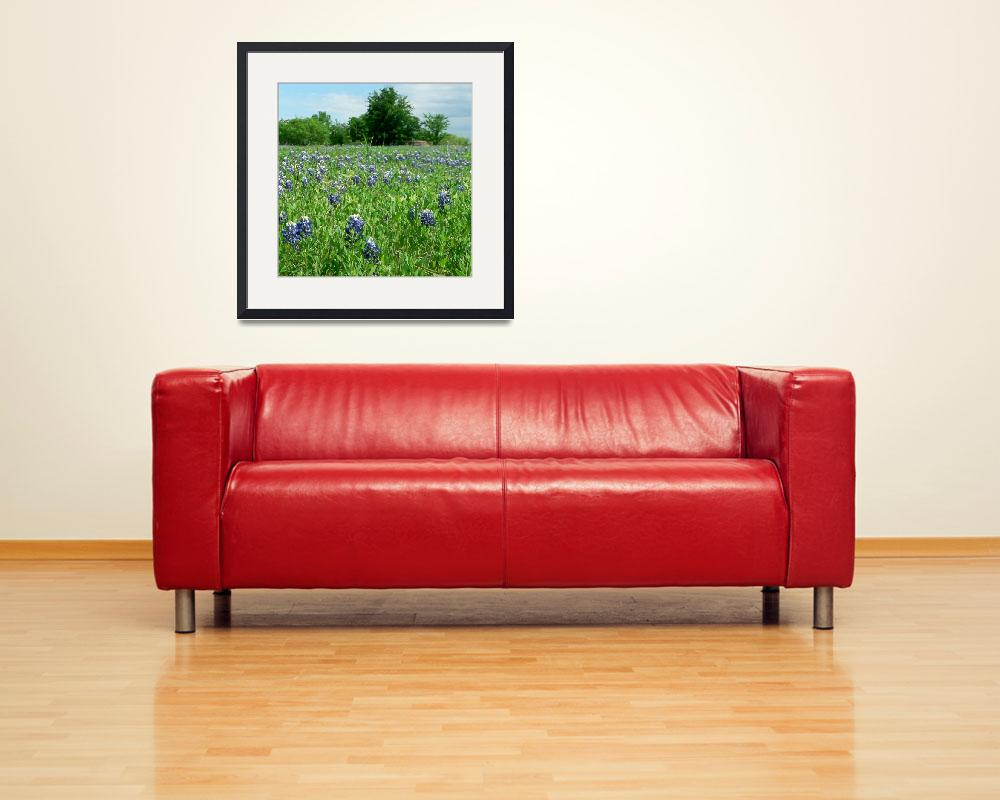 """""""Scenic TX Wildflowers1100063&quot  (2010) by rayjacque"""