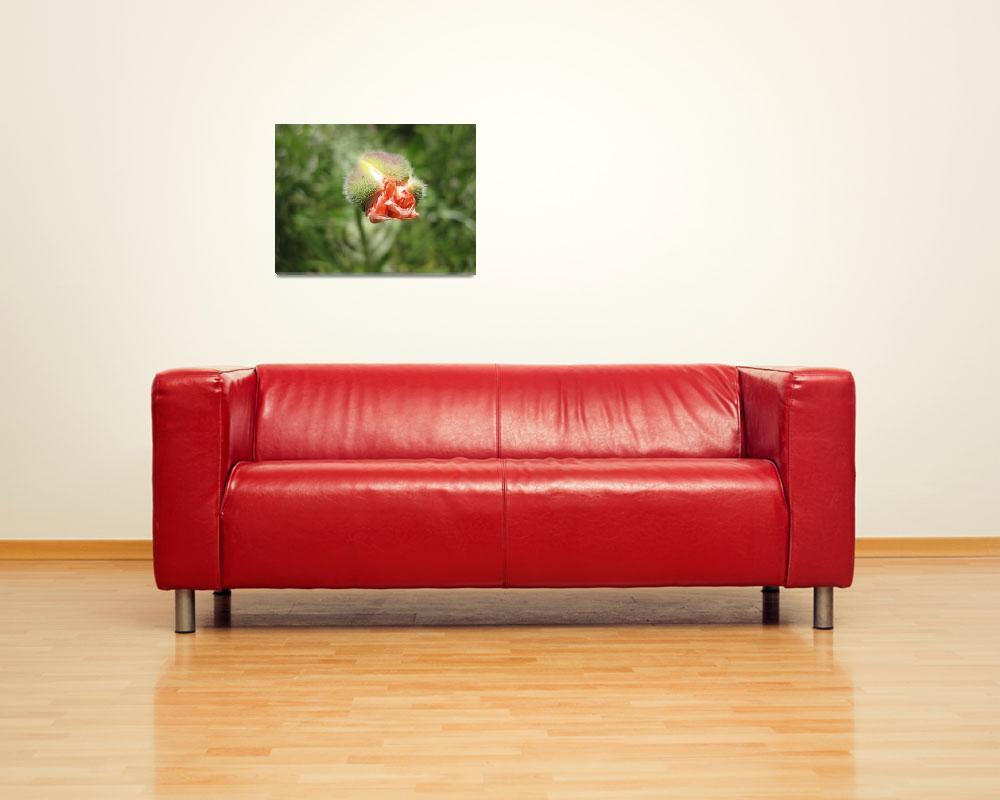 """poppy bud""  (2009) by duman"
