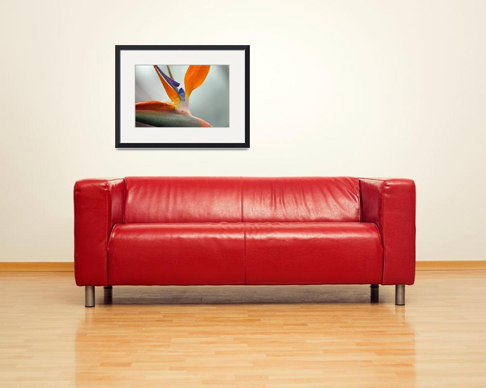 """""""Bird of Paradise&quot  by LJS"""
