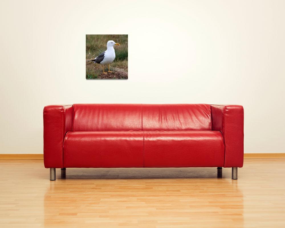 """Lesser black-backed gull""  (2009) by jammyjimbob"