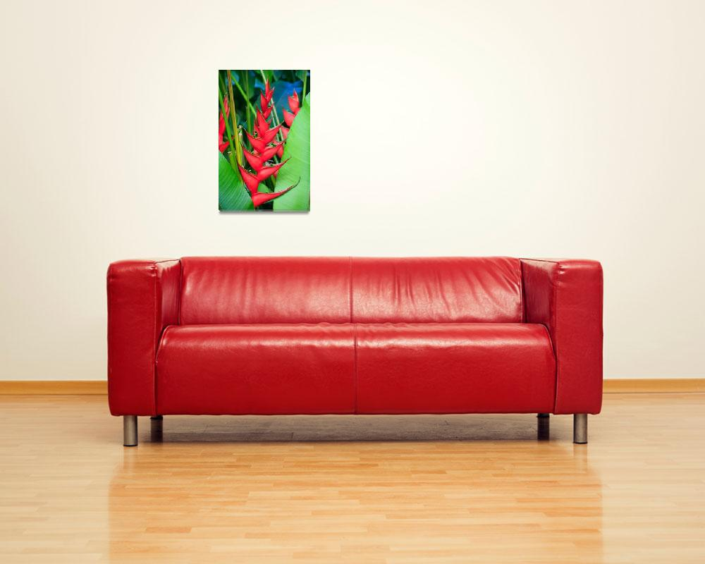 """""""Red Bird of Paradise&quot  (2009) by stephenbmack"""