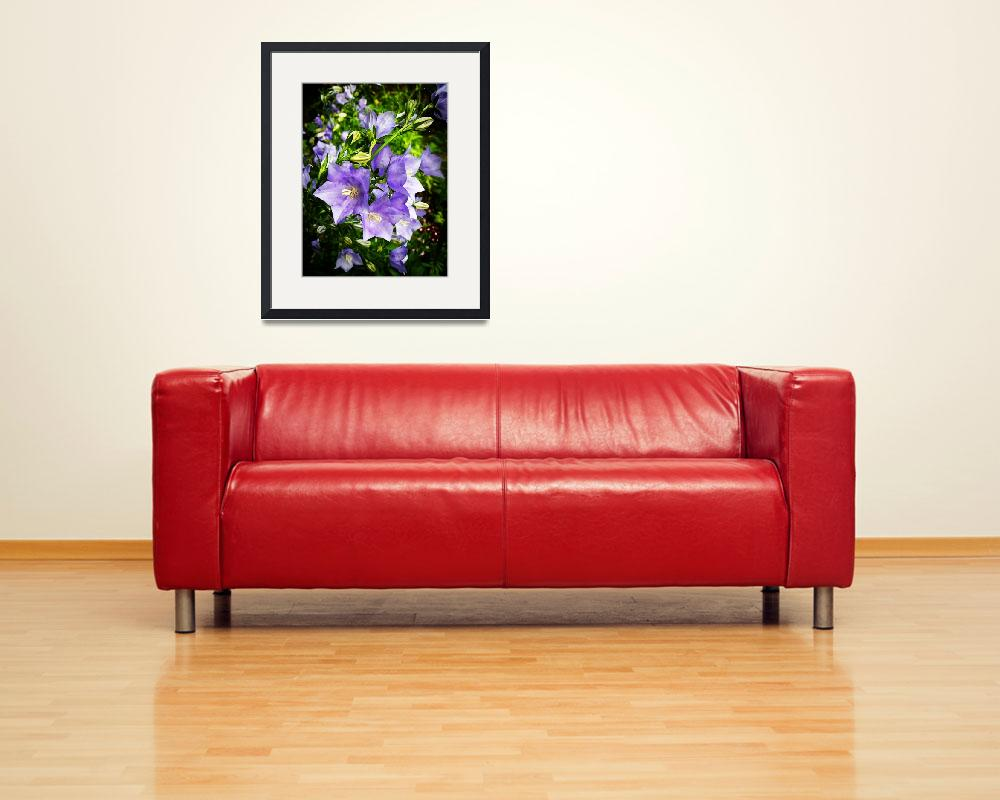 """""""Bellflowers&quot  (2011) by rewards4life"""