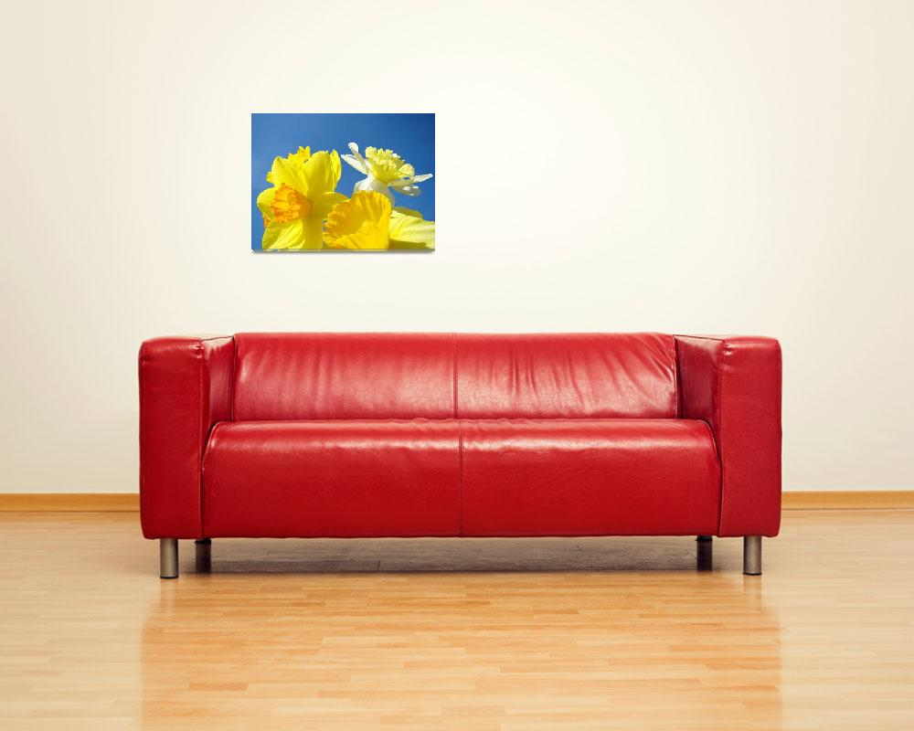 """""""Spring Daffodils Flowers Bright Art Prints Blue Sk&quot  (2014) by BasleeTroutman"""