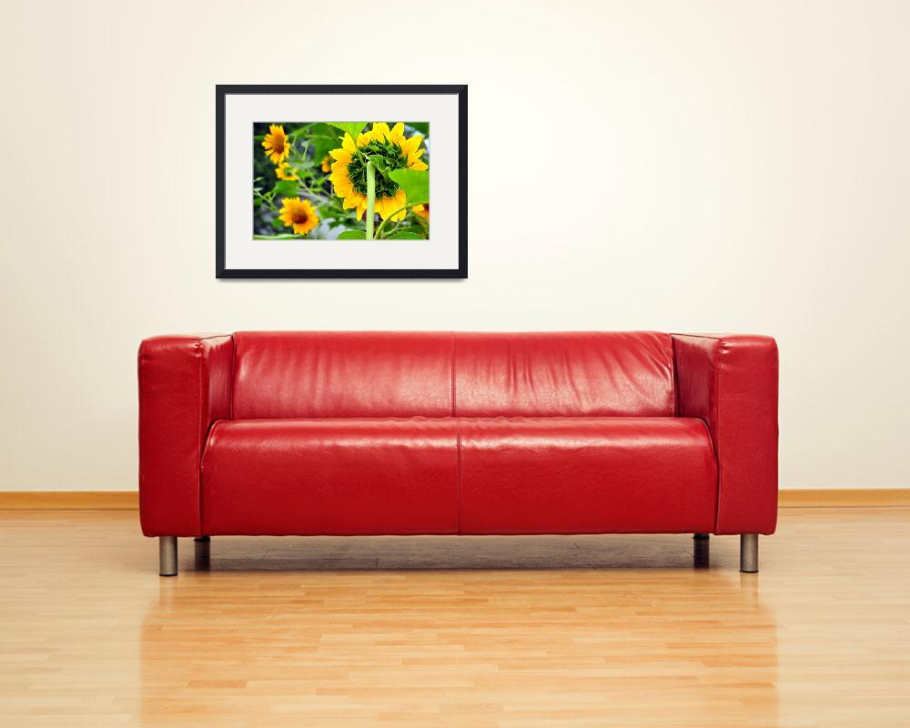 """""""Sunflowers&quot  (2010) by sportsmosaic"""