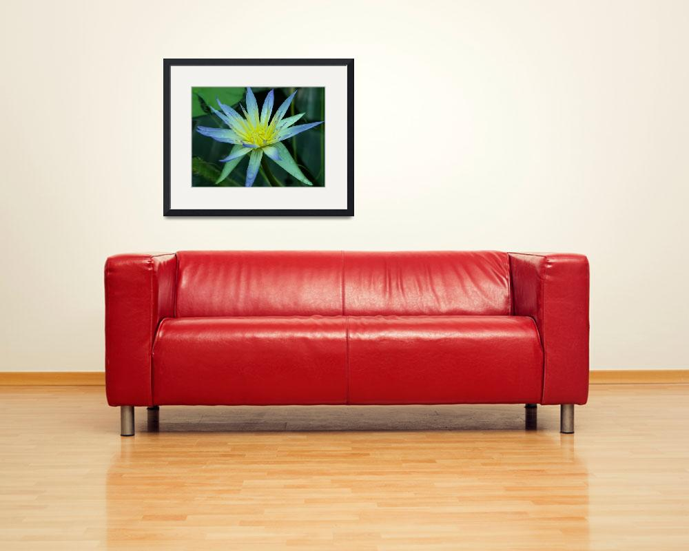 """""""water lilly&quot  (2009) by CliffOutram"""