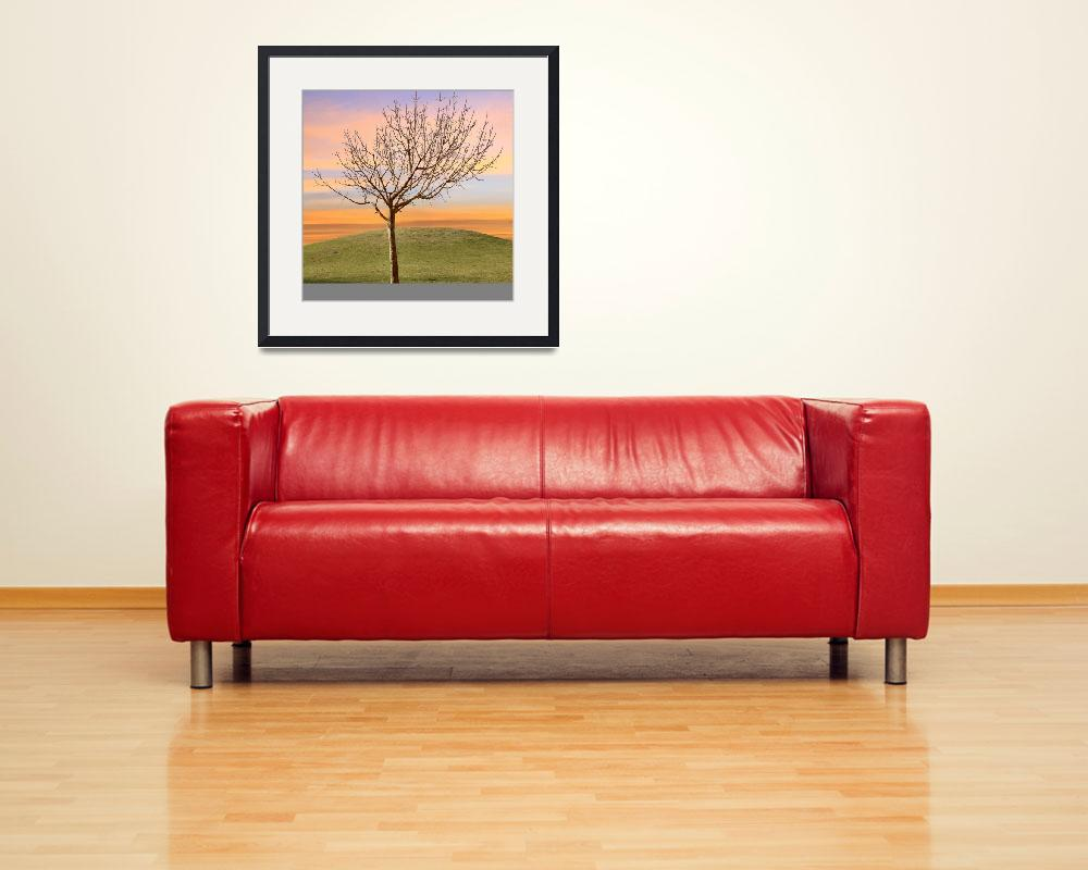 """""""Bare Tree in Sunset Solitude&quot  (2013) by charker"""