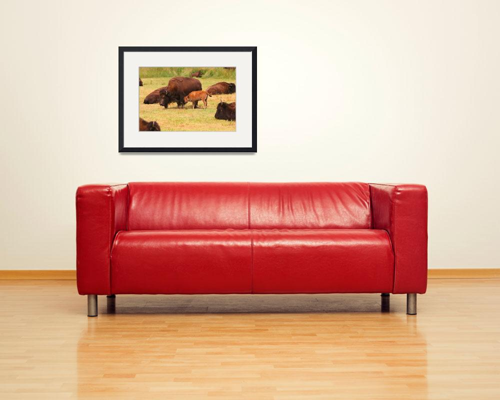 """Buffalo with calf""  (2008) by jones3006"