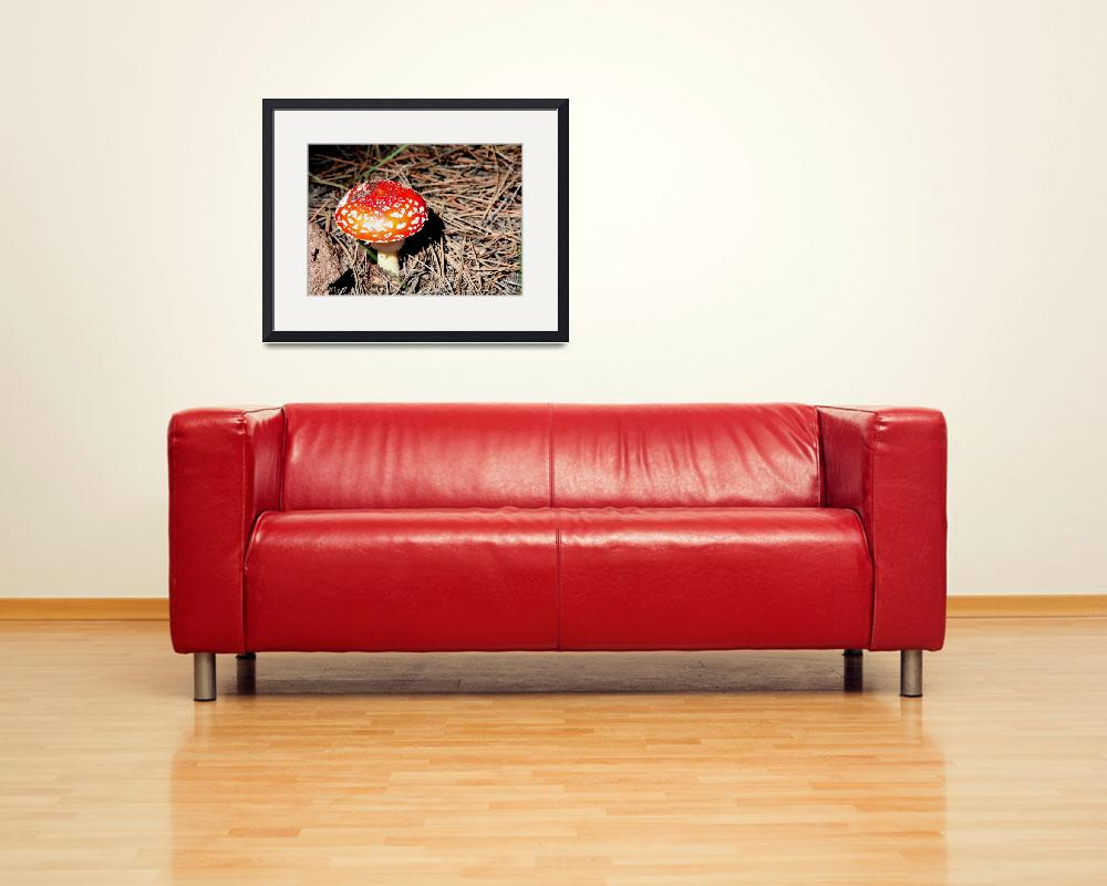 """""""Fly Agaric 3682&quot  (2010) by rayjacque"""