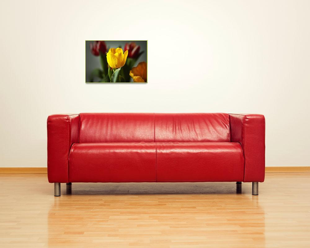 """""""Yellow Tulip&quot  (2009) by rmccord"""