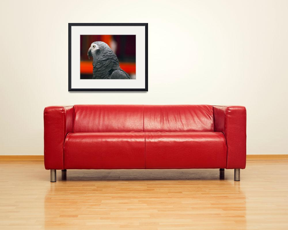 """African Grey Parrot""  (2011) by janesprints"
