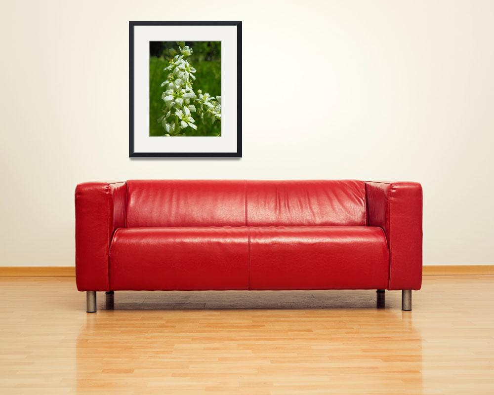 """""""Botanical - Corn Lily - Outdoors Floral&quot  by artsandi"""