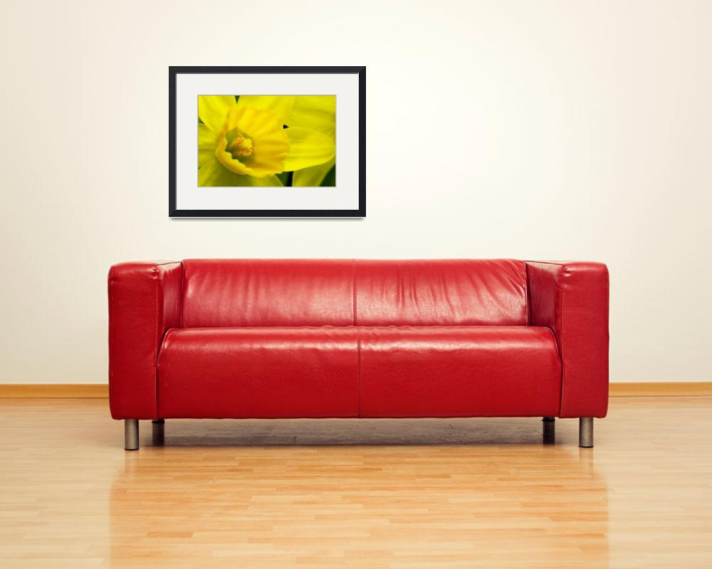 """""""Miniature Daffodil&quot  (2007) by brianauer"""