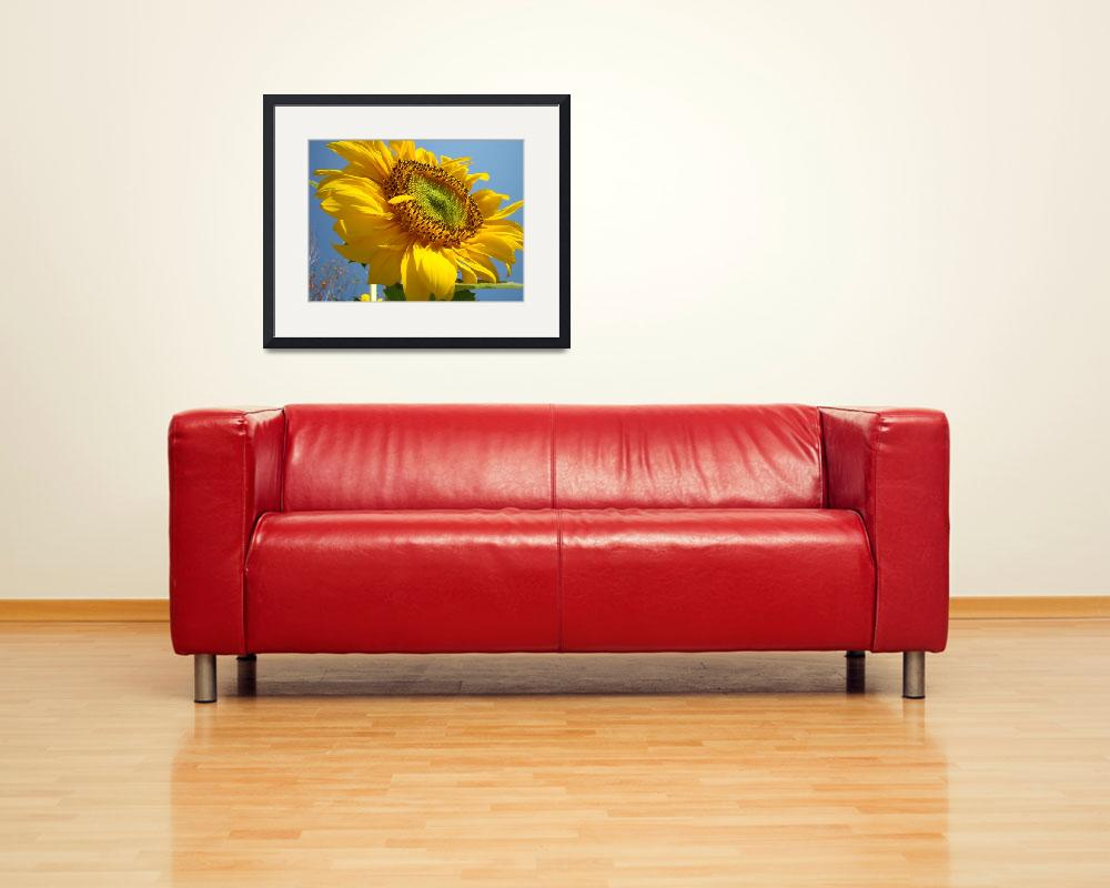"""""""SUNFLOWER Sunny Blue Sky Art Giclee Baslee Trout&quot  (2009) by BasleeTroutman"""