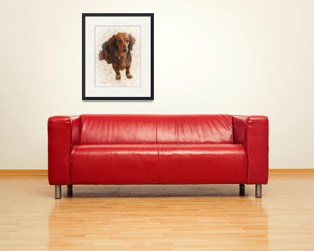 """""""SWEET DACHSHUND&quot  (2013) by shaynaphotography"""