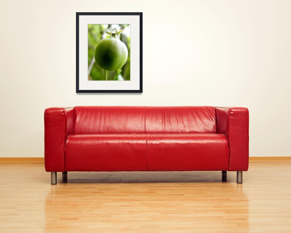 """""""Growing Apple&quot  (2009) by Kimmary"""